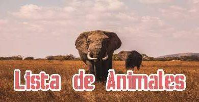 Lista de Animales