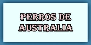Perros de Australia
