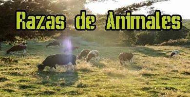 Razas de Animales